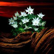 花と枯れ木
